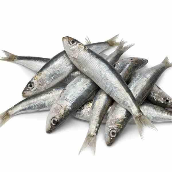 Sardines 2 LB Bag